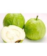 Fresh Guava Fruits 5 Lbs - $69.99