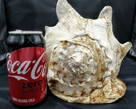 "Large Horned Queen Helmet Conch Sea Shell Nautical Beach Decor 8"" - $44.55"