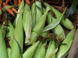 Corn, Sweet, Golden Bantam, Heirloom, 42 Seeds! - $14.35