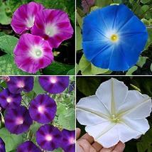 Non GMO Bulk Morning Glory, Mix Flower Seeds (50 Lbs) - $1,135.49