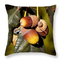 Acorns, Throw Pillow, seat cushion, fine art, h... - $41.99 - $69.99