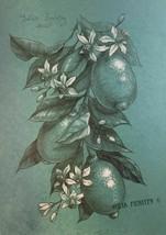Lemon Citrus flowers and fruits. Pencil and white pastel original drawin... - $56.33