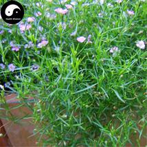 Buy Rosa Pink Prosperity Flower Seeds 200pcs Plant Flower Garden Prosperity - $9.99