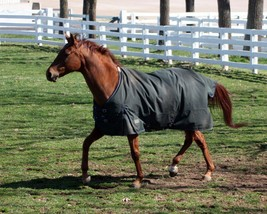 COLOR PHOTO - FUNNY CIDE    Playing in paddock # 3 - $8.00+