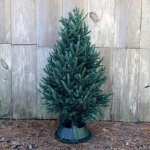 5 ft. Freshly Cut Black Hill Spruce Real Christmas Tree - $2.142,70 MXN