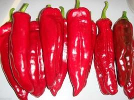 Sweet pepper 'Red bull's horn'50 Seeds, Open Pollinated, Heirloom, Organ... - $1.93