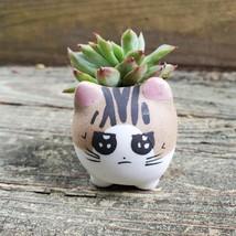 "Ceramic Cat Planters, set of 6, 2.5"" Animal Pots, Emotion Face Kitten Kitty image 8"