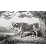 AESOP FABLES Animals Envious Frog & Ox - 1811 Original Etching Print - $22.49