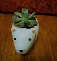 "Echeveria Succulent in Polar Bear Planter, 5"" white glazed ceramic animal pot image 4"