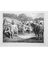 1801 ORIGINAL ETCHING Print by Howitt - Cattle Herd Cows Bulls Drink Riv... - $20.92