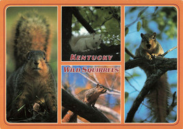Multiview Of Kentucky Wild Squirrels Garry Walter Printed Unposted Postcard - $14.50
