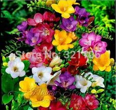 Colorful freesia seeds, DIY flower plants, decorative garden, optimize the air - $2.00