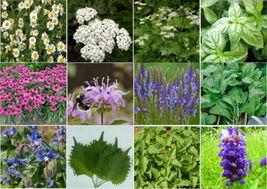 12 Pack Medicinal Herb Kit 1200 Seeds - $7.99