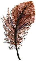 Custom and Unique Fancy Feather Collection[Brown Feather ] Embroidered I... - $6.92