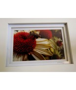 White Daisy Flower Bumble Bee Photo Framed Matted 5X7 Fine Art Photography Print - $24.00