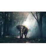 Elephant -  Art Picture Poster Photo Print 2ELE - $14.99+