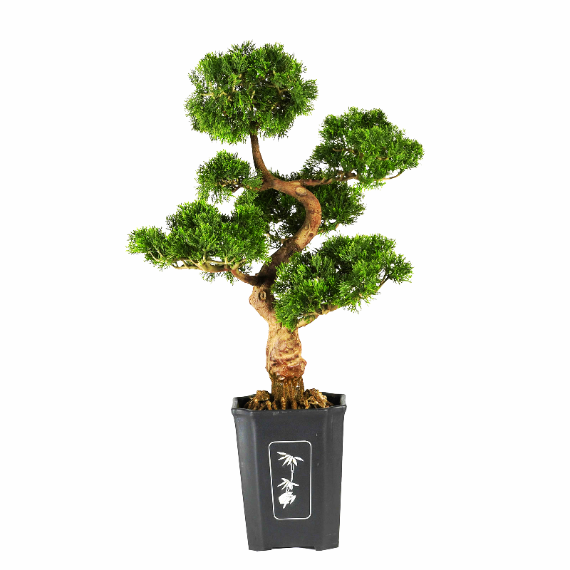 "Primary image for Cedar Bonsai 36"" Silk Plant"