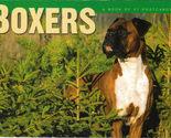 Boxer postcards thumb155 crop