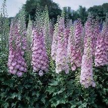 100 Light Purple Delphinium Seeds Perennial Garden Flower Bright - TTS - $23.95