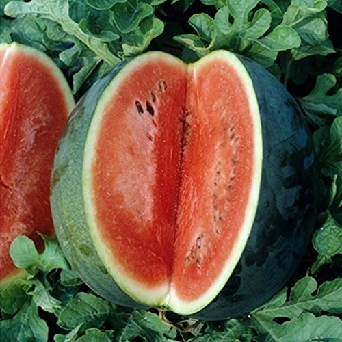 Watermelon Seeds - Florida Giant - Packet, Vegetable Seeds - $2.67