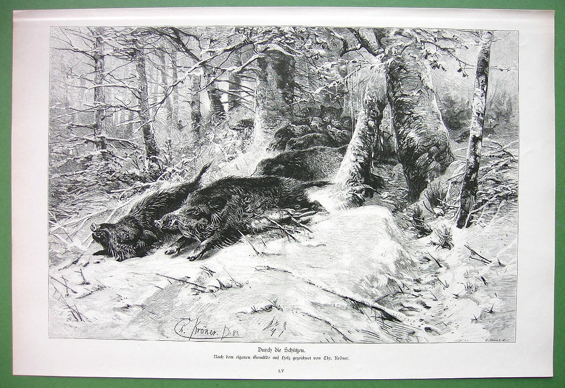 Primary image for WILD BOARS Hunted in Winter Forest - VICTORIAN Antique Print