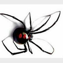 Black Spider 3d Waterproof Temporary Tattoo Stickers - One Sheet image 4