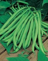 Bean Blue Lake Great Heirloom Garden Vegetable Seeds By Seed Kingdom 700... - $13.79
