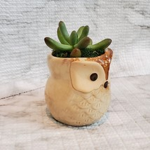 Owl Planter with Succulent, Many Fingers Sedum Pachyphyllum, Bird Animal Planter image 6
