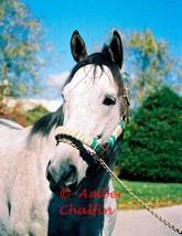 COLOR PHOTO - 8x10 Holy Bull  at Jonabell Farm - 1994 Horse of The Year (2) - $20.00+