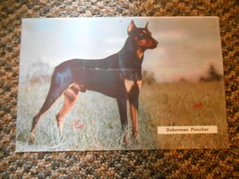 Old Vintage Calendar Picture Print Doberman Pinscher Dog & Classic Car o... - $9.99