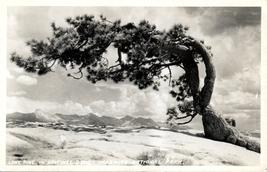 Lone Pine Sentinel Dome Yosemite National Park RPPC Postcard ca 1950 - $4.99
