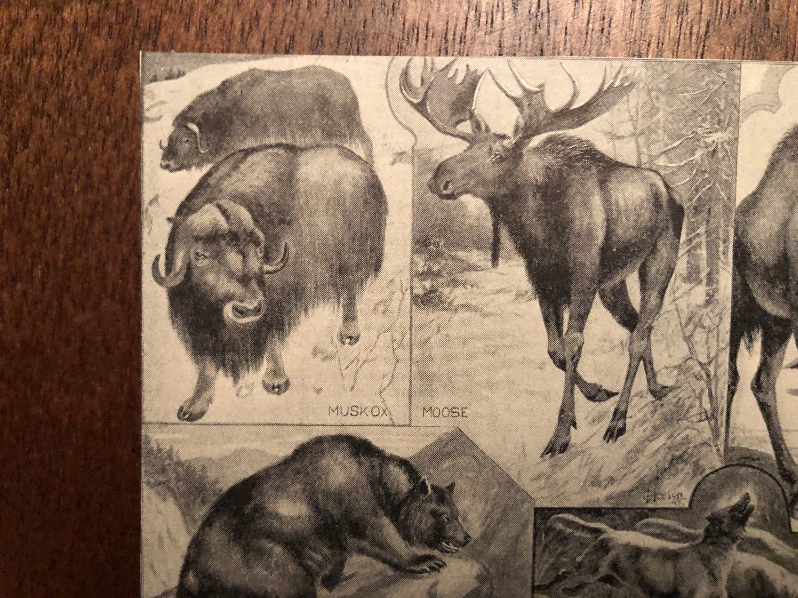 """Vintage Engraving Print of NORTH AMERICAN Animals Unframed 3.5"""" x 4.25"""""""