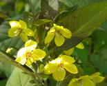 2012 plant walks 388 thumb155 crop