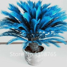100pcs/bag Blue Cycas Seeds Sago Palm Tree Bonsai Flower Seeds Rare Pott... - $3.99