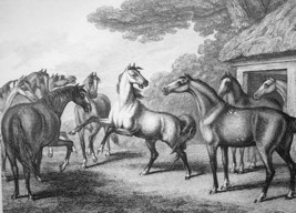 ANIMALS Council of Horses - 1811 Original Etching Print - $21.60