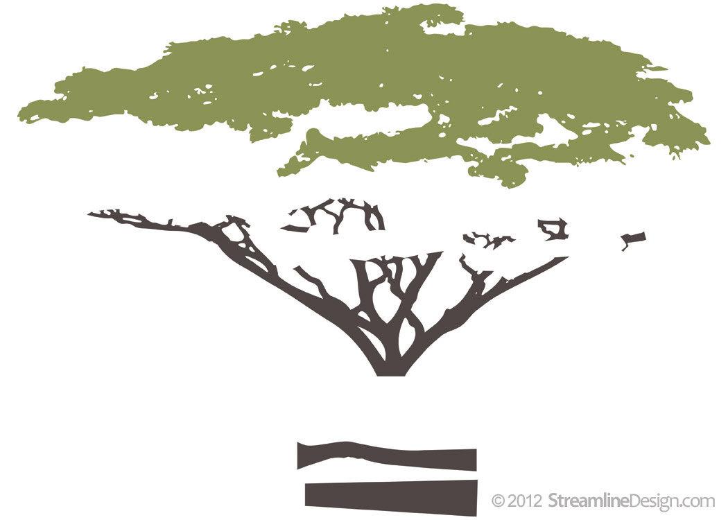 Giant Six Foot tall Acacia Tree