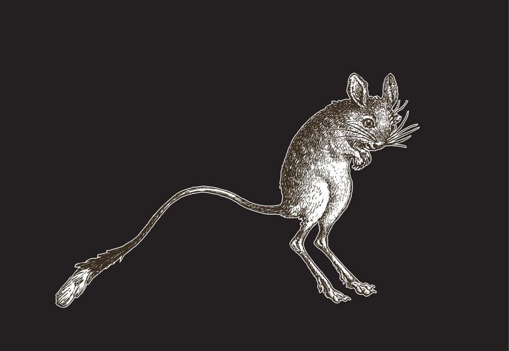 Kangaroo Mouse Vinyl Laptop Art