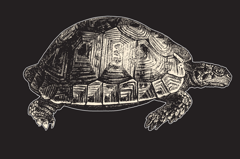 Highly Detailed Woodcut Style Turtle Vinyl Laptop Art