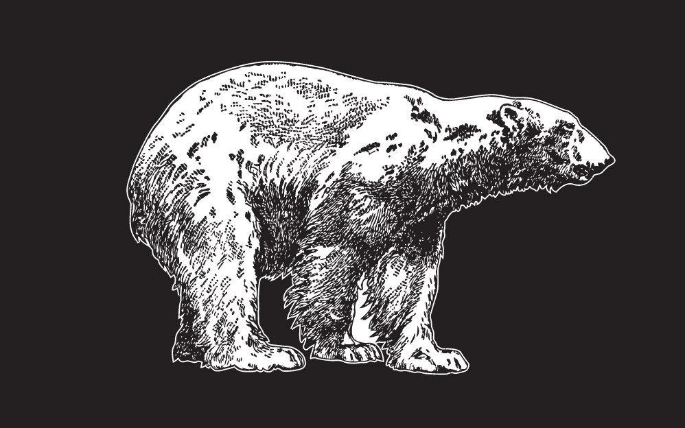 Polar Bear Vinyl Laptop Art