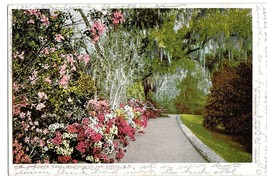 Charleston SC The Slope Walk Magnolia on the Ashley Vintage 1901 Postcar... - $4.99