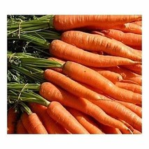 Carrot Little Fingers Non GMO Heirloom Petite Sweet Crunchy Vegetable 100 Seeds  - $3.94