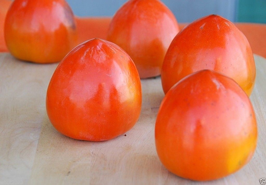 SHIPPED From US_Japanese Persimmon, Asian Persimmons 20 SEEDS-WB