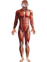 Anatomía Disfraz para Hombre, de Halloween, Terror, 96.5cm-102cm, Hombre - $86.43