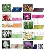 Aura Incense Sticks 10 Packets - Sandalwood, Rose & Jasmine Fragrance Stick - $33.50
