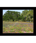 South Texas Field of Wildflowers Fine Art Print - $17.50
