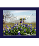 South Texas Scenic of Bluebonnets and Yucca Fine Art Print - $17.50