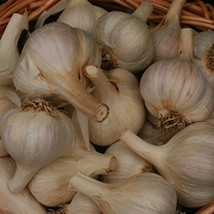 Organically Grown Georgian Fire Garlic (1/2 Lb Culinary) - $7.92