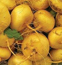 "2000 seeds - Golden Globe ""Goldie"" Turnip - Organic Heirloom no gmo - $8.91"