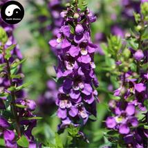 Buy Matthiola Incana Flower Seeds 100pcs Plant Flower Matthiola Incana - $5.99