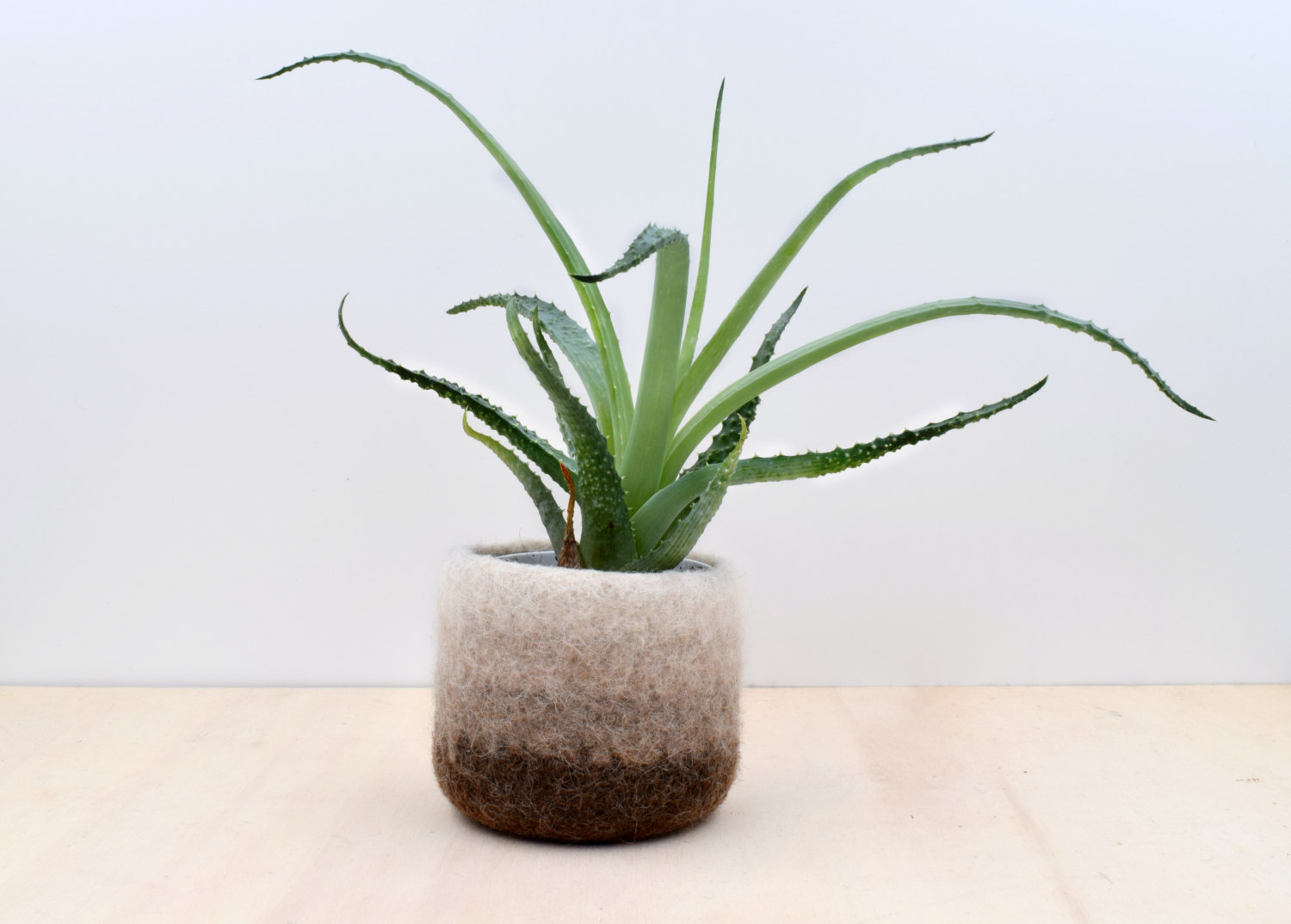 Primary image for Felt succulent vase / Earth / felted planter / cactus vase / Ombre brown / house